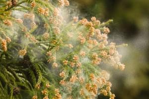 花粉背中ニキビ