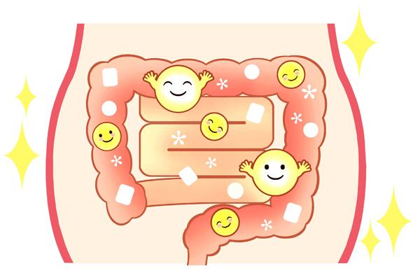 腸に到達する力強い乳酸菌