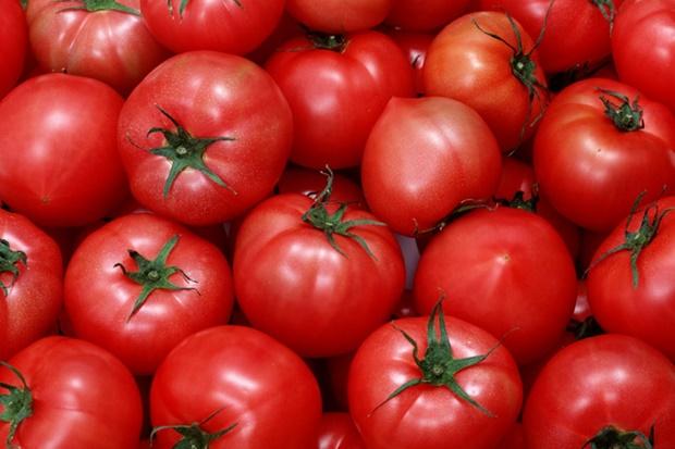 トマトリコピン効果